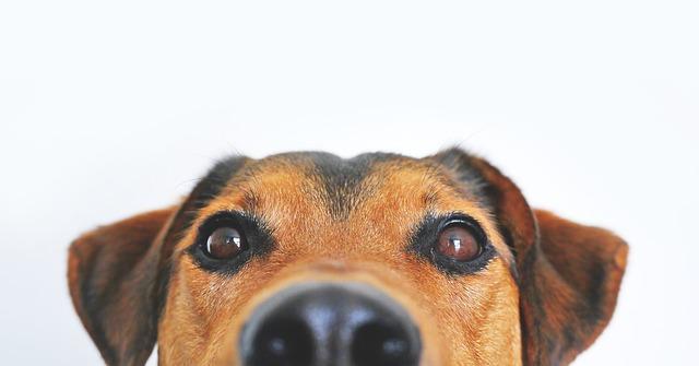 Vitaminban gazdag kutyatáp